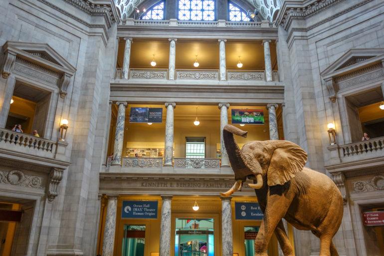 In Washington D. C. im Museum of Natural History steht inmitten der mehrstöckigen Eingangshalle eine lebensgroßer Elefantenstatue.