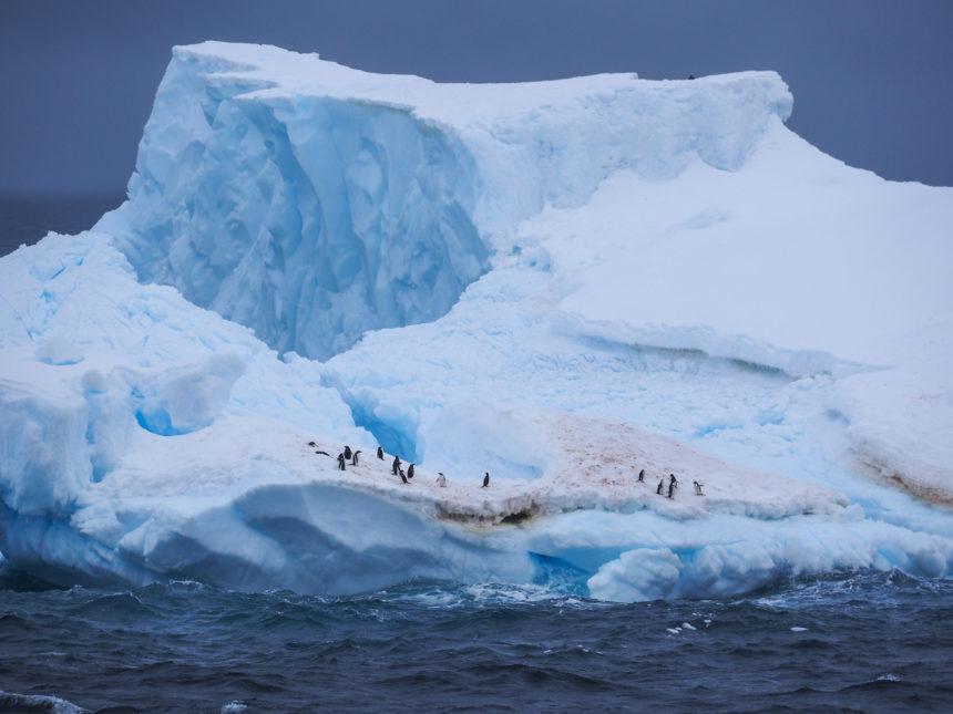 Travellers Insight Reiseblog Antarktis Eselspinguine
