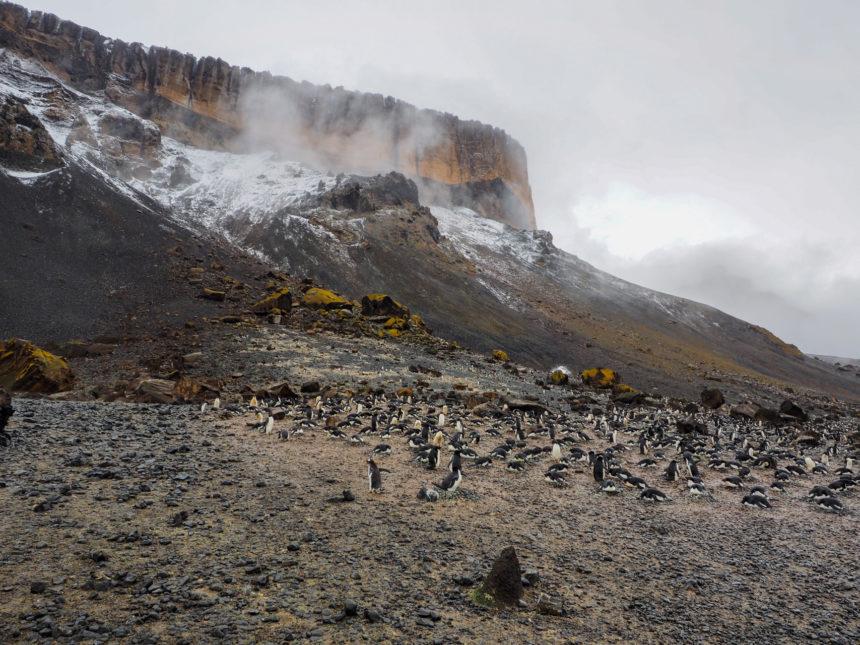 Travellers Insight Reiseblog Antarktis Adeliepinguin