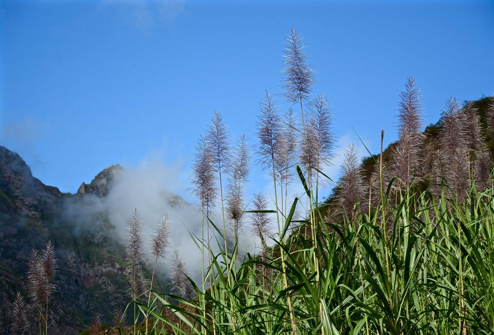 Kapverden Kapverdische Inseln Santo Antao Zuckerrohr