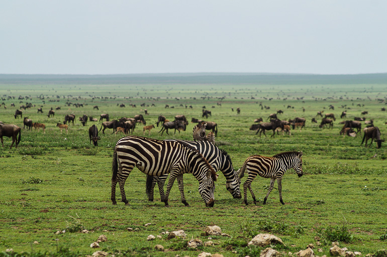 Tansania Safari Travellers Insight Reiseblog Big Migration