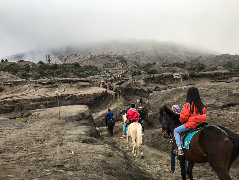 Travellers Insight Reiseblog Indonesien Java Bromo Pferde