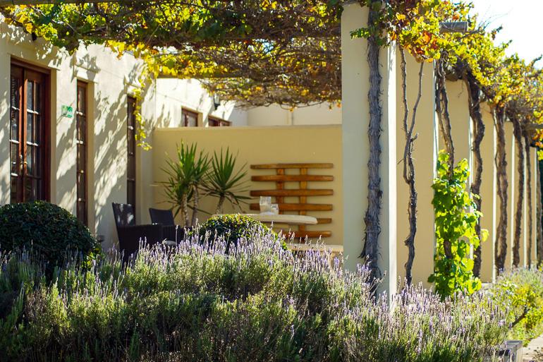 Travellers Insight Reiseblog Südafrika Wein Cultivar