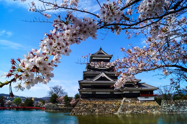 Travellers Insight Reiseblog Japan Tokio Matsumoto Schloss Kirschblüte