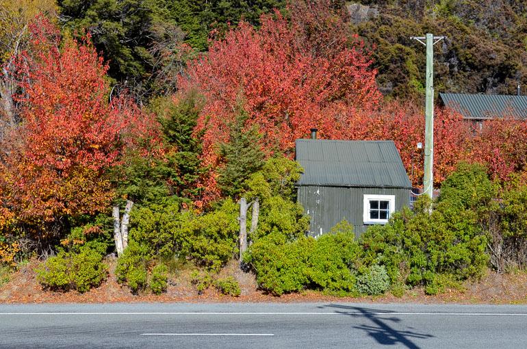 Travellers Insight Reiseblog Neuseeland Reise Herbstblätter