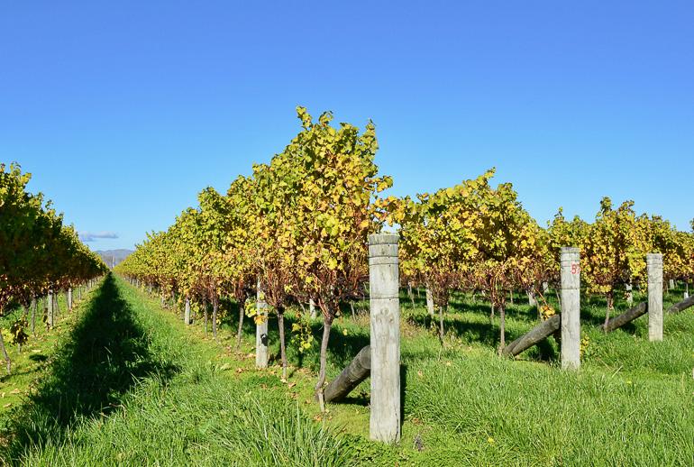Travellers insight Reiseblog Neuseeland Südinsel Roadtrip Marlborough