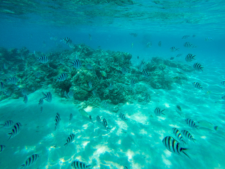 Travellers Insight Reiseblog Cook Inseln Aitutaki Fischschwarm