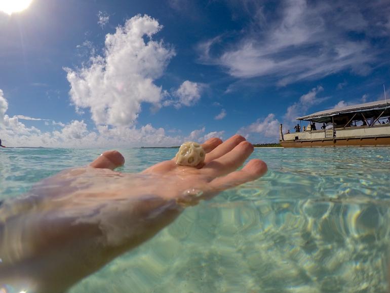 Travellers Insight Reiseblog Cook Inseln Aitutaki Muschel