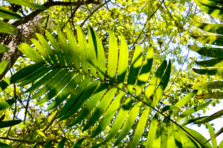 Guatemala-Tikal-Tempel-Pflanzenvielfalt