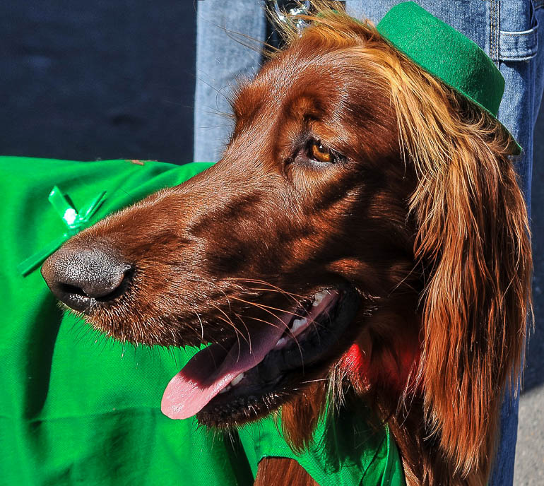 Travellers Insight Reiseblog Events weltweit St. Patricks Day