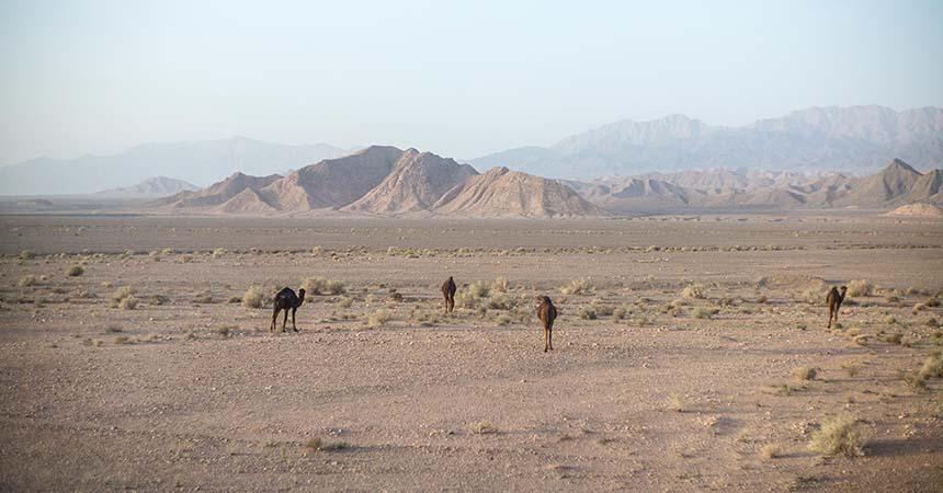 Travellers Insight Reiseblog Iran Eisenbahn Dromedar