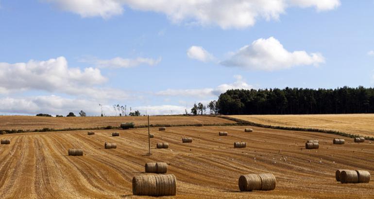 Auf einem Feld in Schottland wurde Schottische Gerste geerntet.