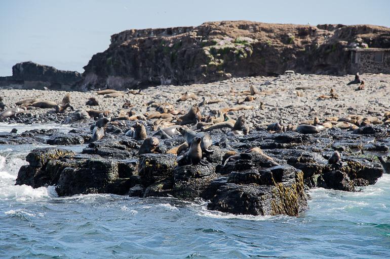Victoria, Australien: Robben auf Phillip Island