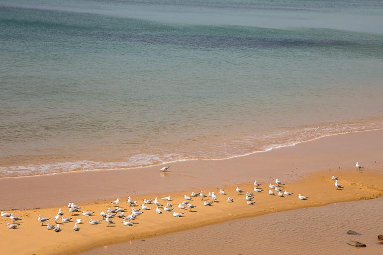 Victoria, Australien: Strand mit Möwen auf Phillip Island