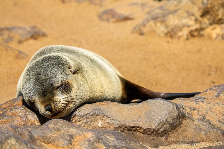 Travellers Insight Reiseblog Namibia Rundreise Seelöwe