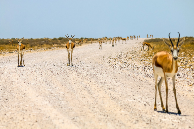 Travellers Insight Reiseblog Namibia Rundreise Etosha National Park