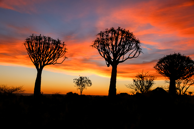 Travellers Insight Reiseblog Namibia Rundreise Quivertree Forest