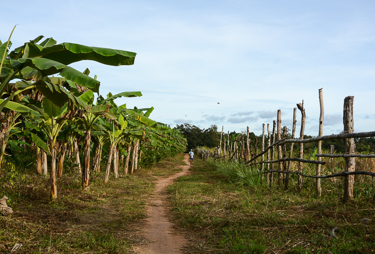 Travellers Insight Reiseblog Reisetipps Kambodscha Cardamom Mountains Chi Path Bananenplantage