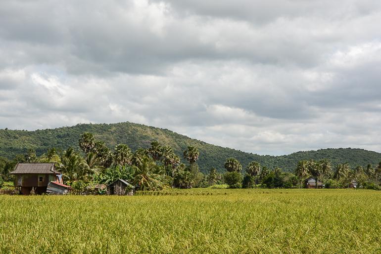 Travellers Insight Reiseblog Reisetipps Kambodscha Kampot Reisfelder