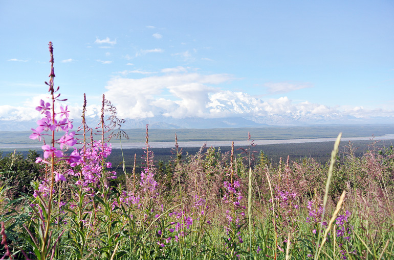 Travellers Insight Reiseblog Alaska Yukon Roadtrip Bergkette Mount Denali