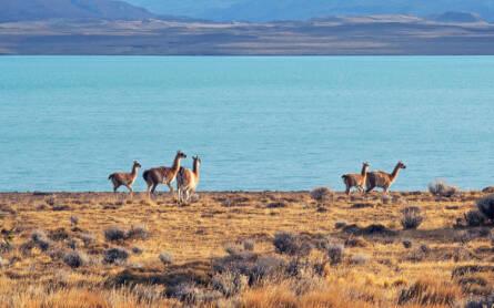 Chile Lago San Martin