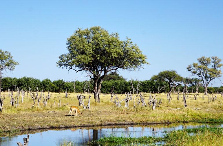 Auf safari: 7 tipps für kleidung anbieter packliste u2013 travellers