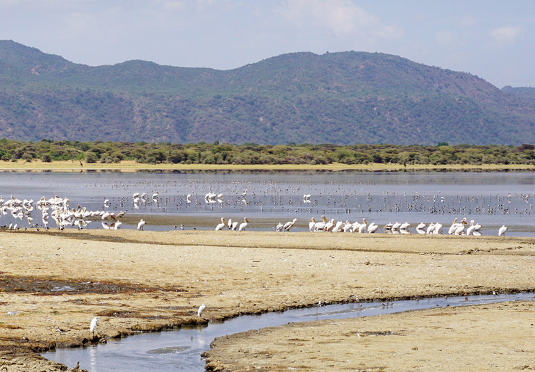 Lake Manyara in Tansania