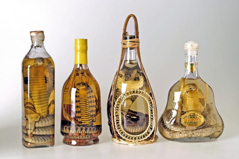 In Flaschen eingelegte Schlangen