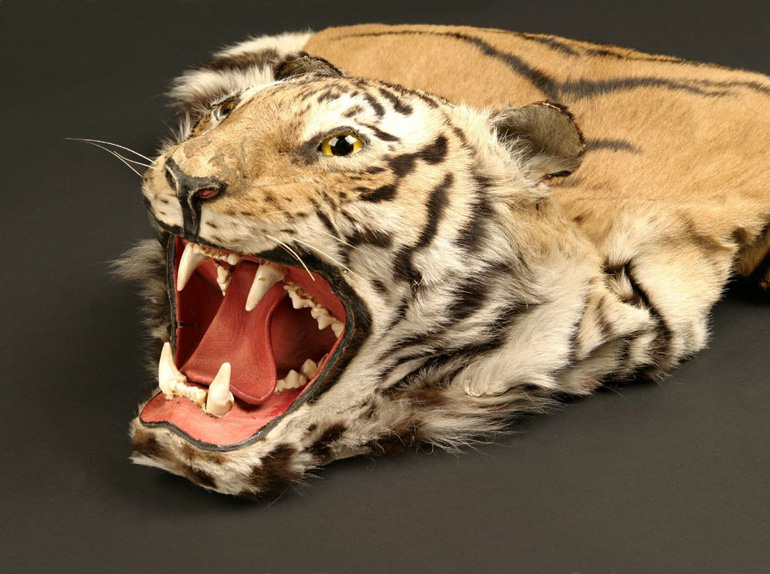 Tigerkopf als Souvenir
