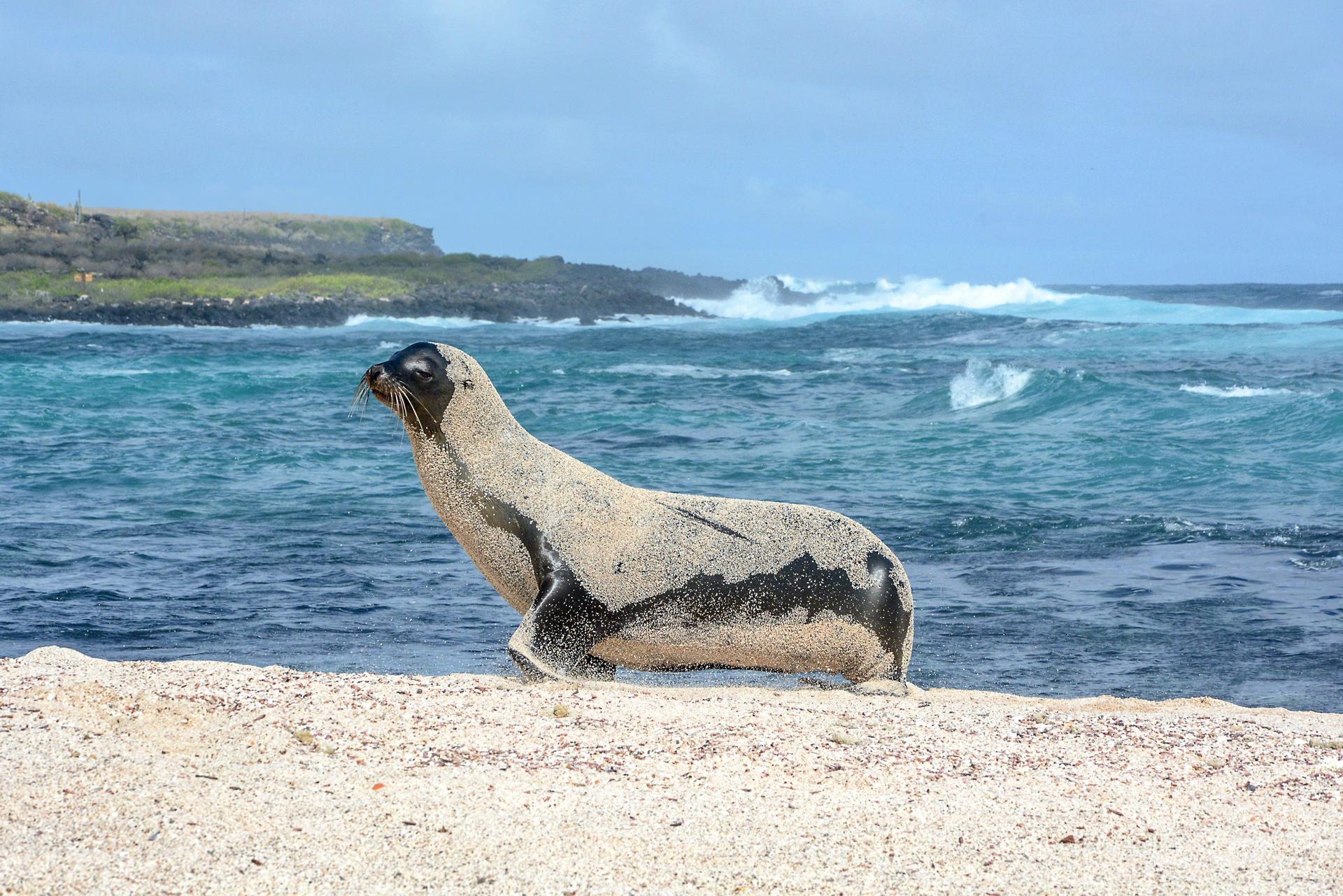 Sehen und gesehen werden am weitläufigen Strand La Lobería auf San Cristóbal.