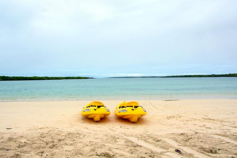 In der Lagune am Playa Mansa tummeln sich Meeresschildkröten und Haie, die aber harmlos sind.