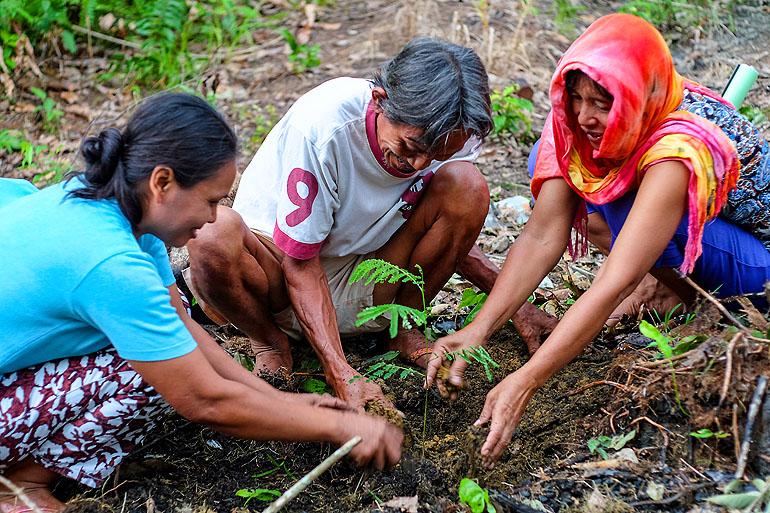 Bauern auf Kalimantan beim Pflanztraining