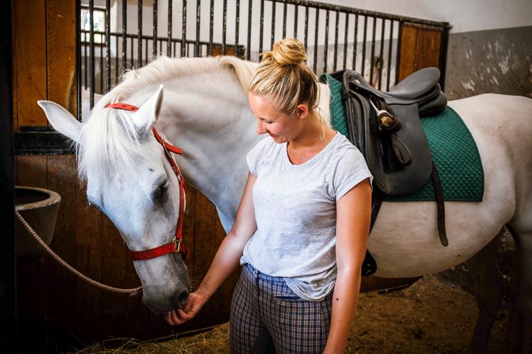 Line mit Pferd auf dem Lippizanergestüt