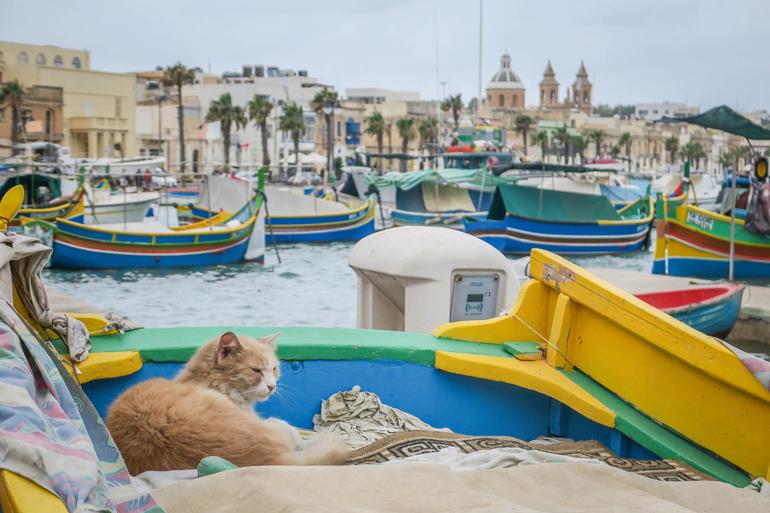 Katze liegt in einem Fischerboot im Hafen von Marsaxlokk