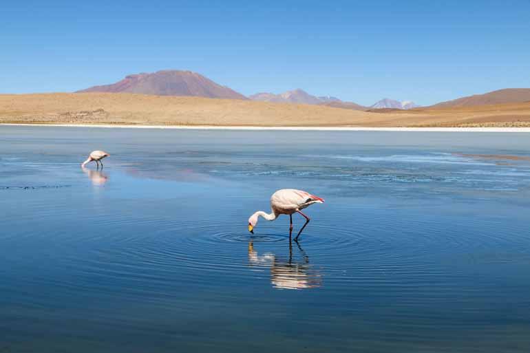 Zwei Flamingos stehen in einer Lagune.