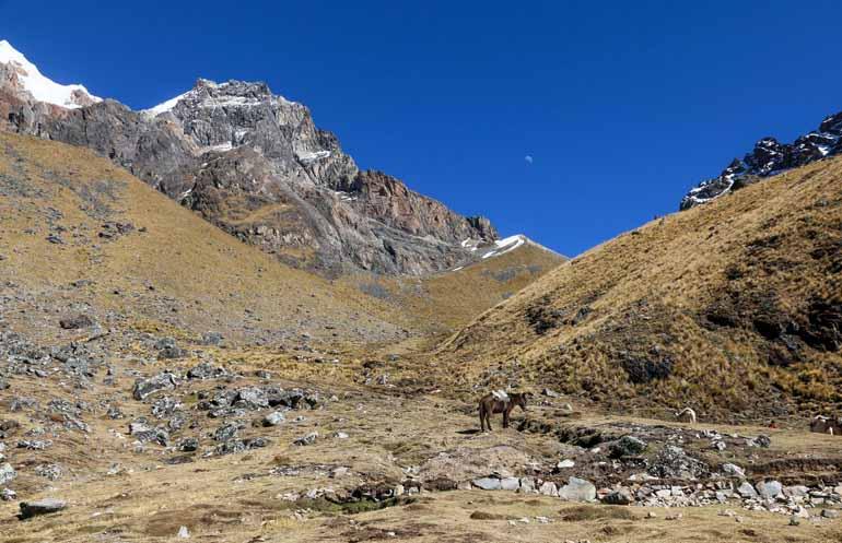 Ein Berg mit Esel im Vordergrund.