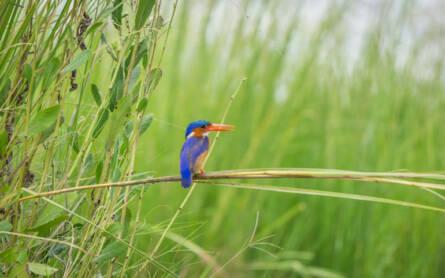 Vogel sitzt auf einem Grashalm