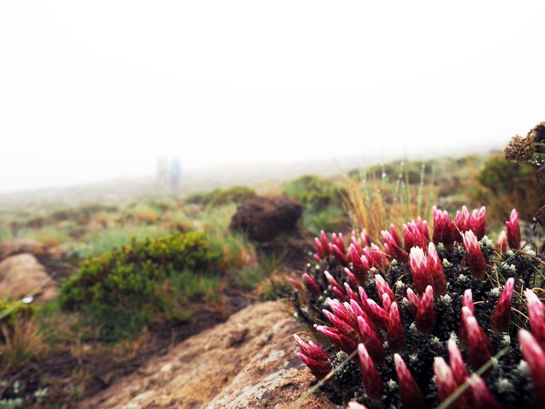 Südafrika Drakensberge: Blumen auf einem Felsen
