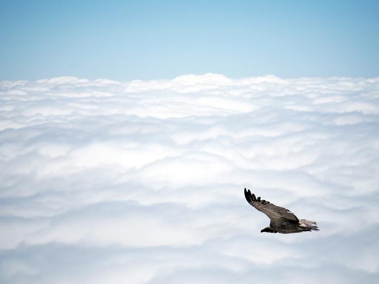 Südafrika Drakensberge: Ein Vogel über den Wolken