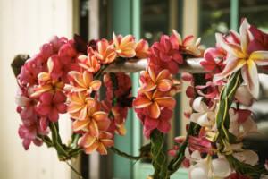 Hawaii Blumenschmuck