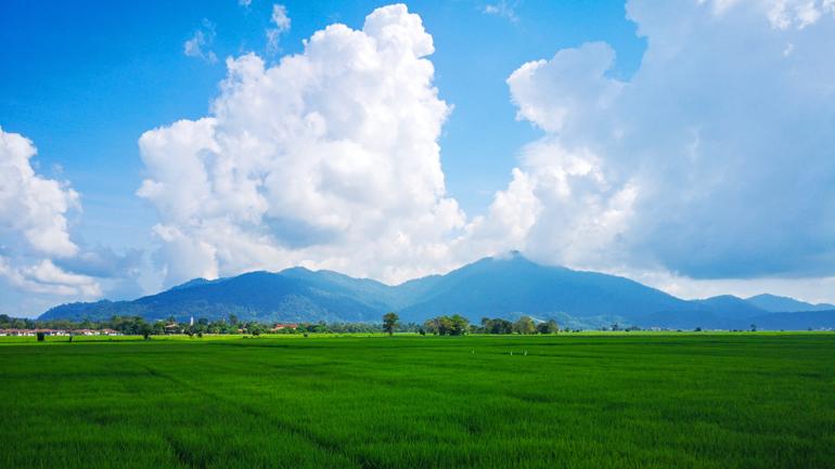 Malaysia: Ausblick auf Reisfeld mit Bergen im Hintergrund