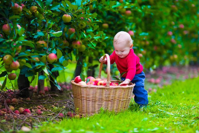 Baby mit Apfelkorb