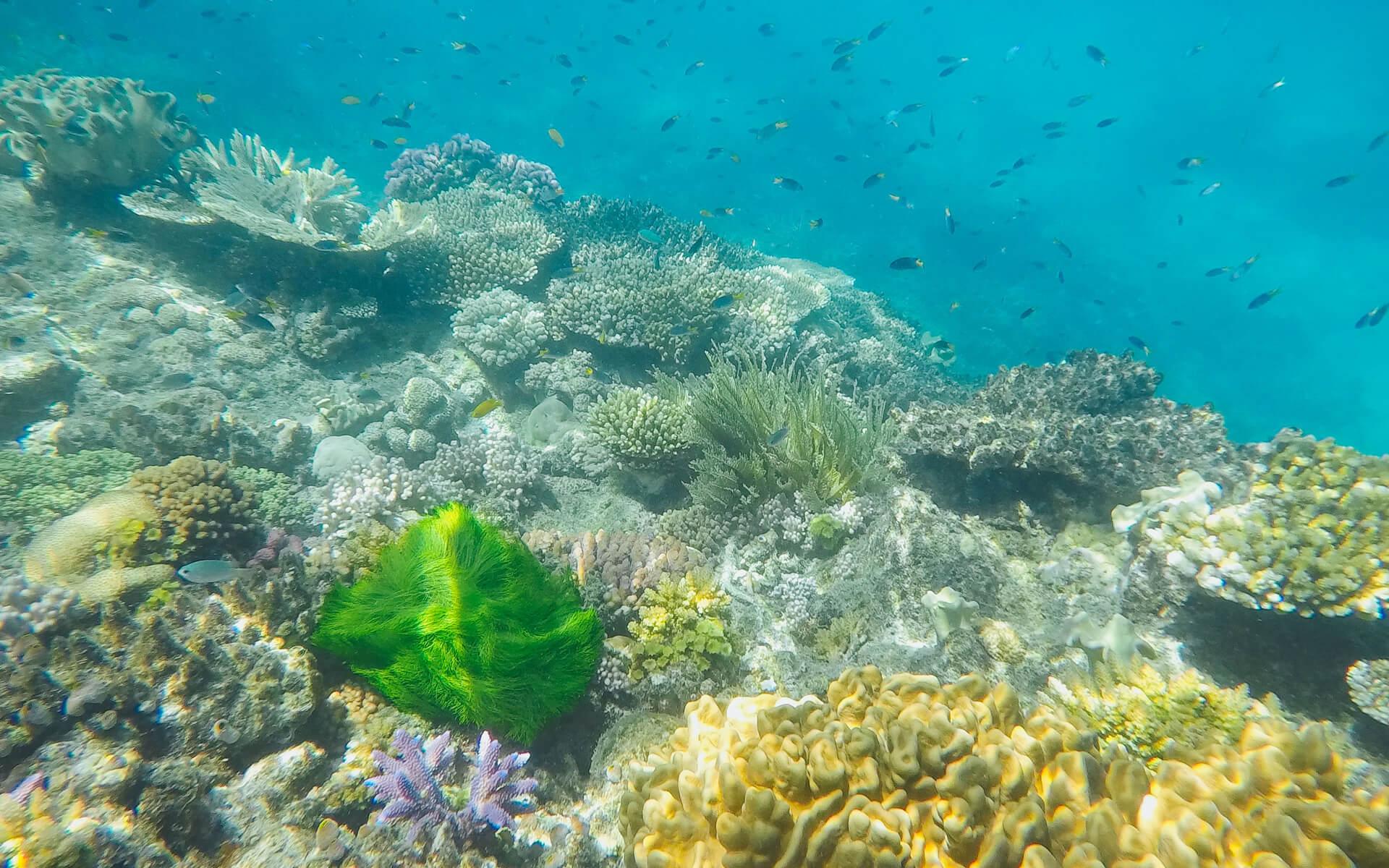 Queensland: Unterwasserwelt