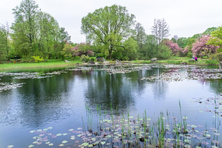 Ein Teich im Botanischen Garten.