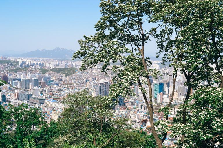 Die Skyline von Seoul ragt hinter Bäumen hervor.