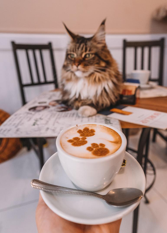 Budapest Städtetrip: Eine Katze liegt auf einem Tisch vor ihr steht ein Kaffee.