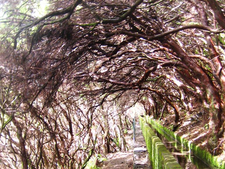 Madeira Tauchen, Surfen: Ein Weg über dem Bäume wachsen.