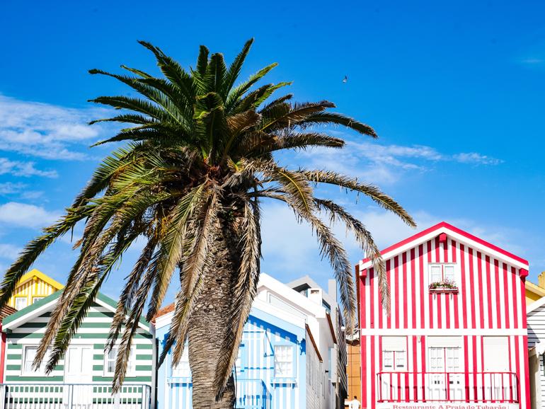 Bunte Häuser, blauer Himmel und eine Palme in Costa Nova, Portugal.