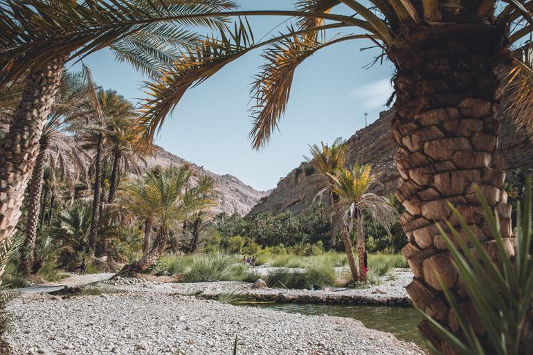 Roadtrip durch den Oman: Palmen mit einem kleinem Fluss dazwischen.