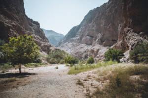 Roadtrip durch den Oman: Ein Tal mit Bergen und ein paar Bäumen.